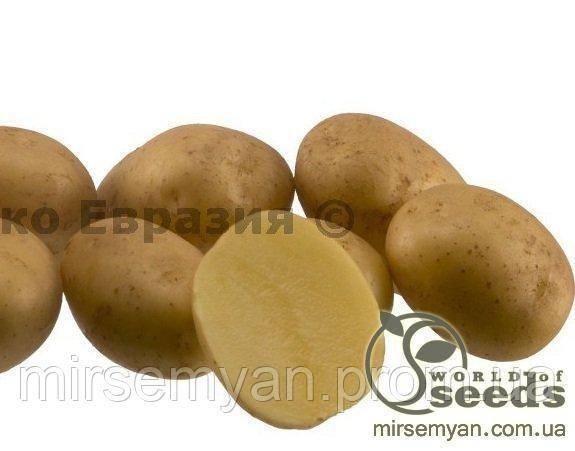 Картофель гранада описание сорта, фото и характеристика