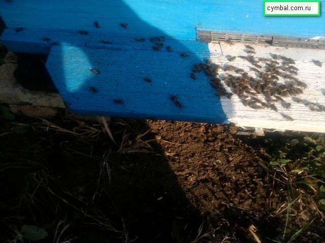 Инструкция по применению препарата «бисанар» для лечения болезней пчёл