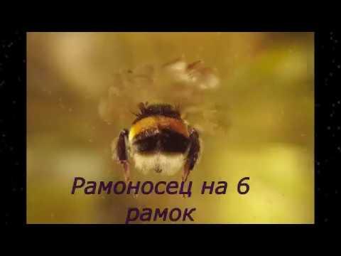 Своими руками ловушки для пчел - чертежи, размеры и инструкции бочка мёда