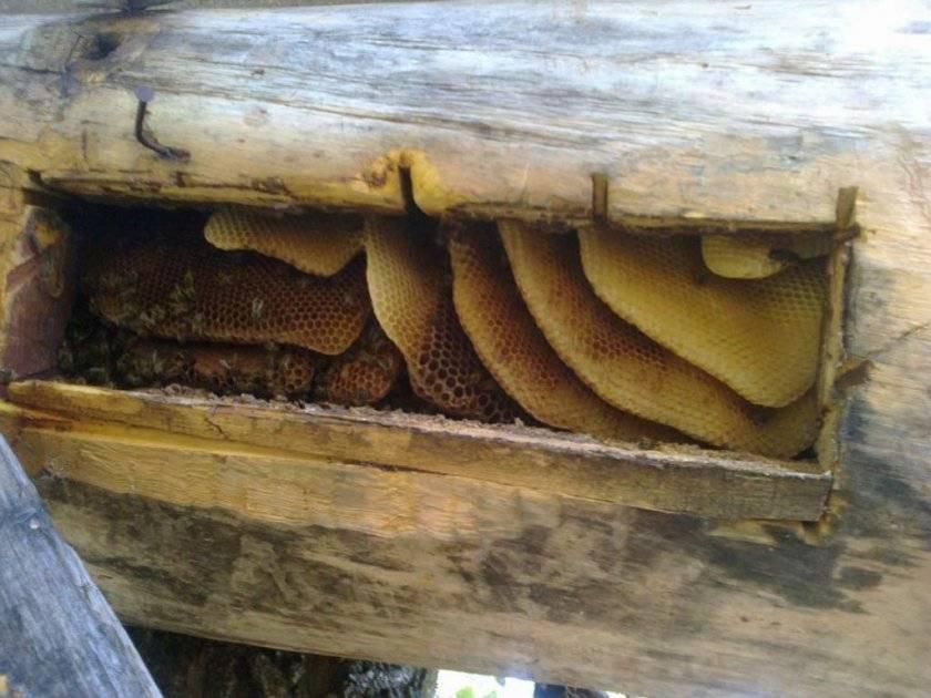 Колода для пчел: характеристики и советы по изготовлению