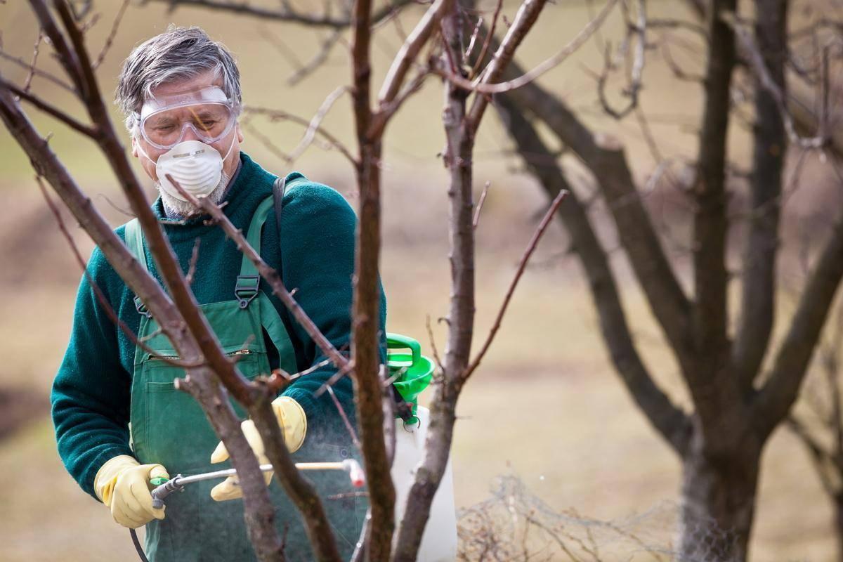 Обработка сада осенью от вредителей и болезней: как, когда и чем