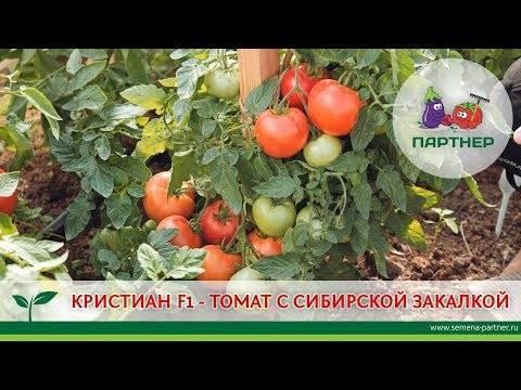 Томат любовь: урожайность, отзывы и фото