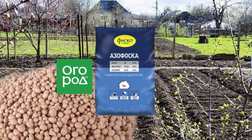 Удобрение нитроаммофоска: инструкция по применению для картофеля, помидор, клубники
