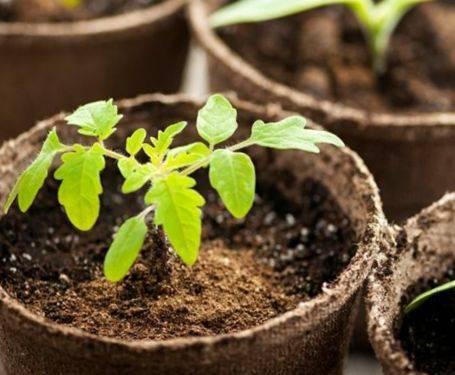 Торфяные таблетки в садоводстве