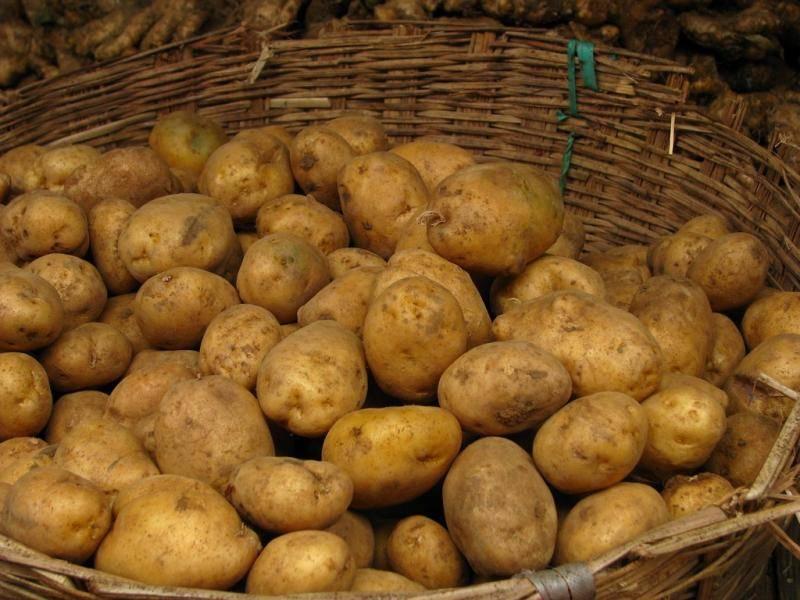 Лорх сорт картофеля