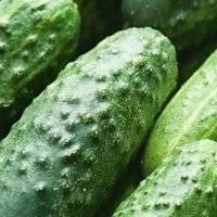Сорт огурцов клавдия f1 — зелёный клад огородника