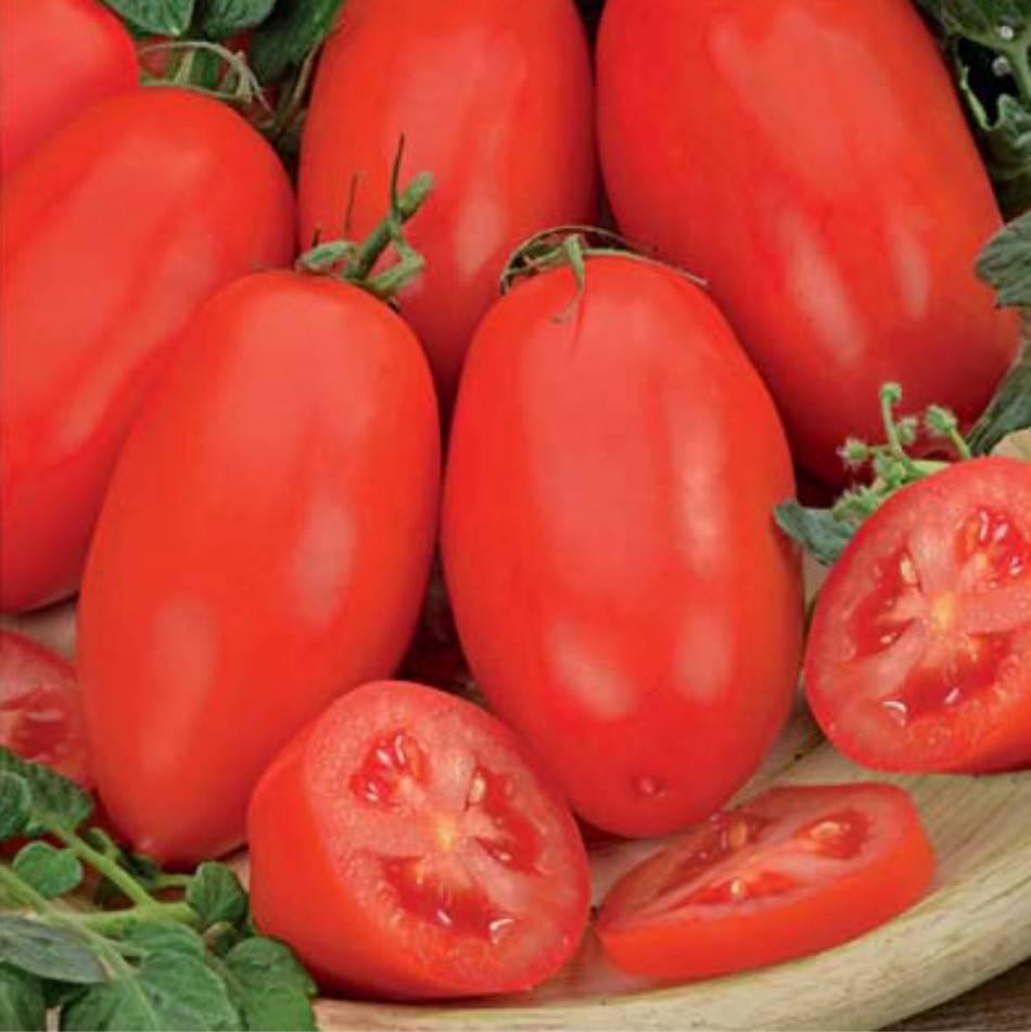 Сорт томата «челнок»: описание, характеристика, посев на рассаду, подкормка, урожайность, фото, видео и самые распространенные болезни томатов