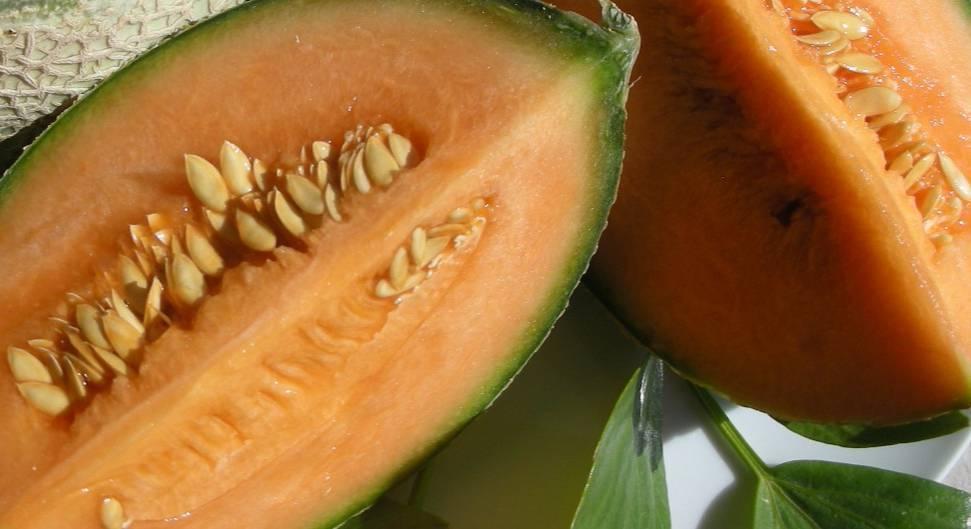 Канталупа дыня: характеристика, секреты успешного выращивания