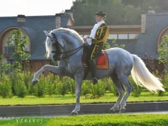 Андалузская порода лошадей — описание и характеристика