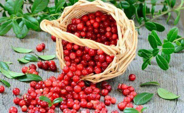 Выращивание садовой кустовой брусники: популярные сорта