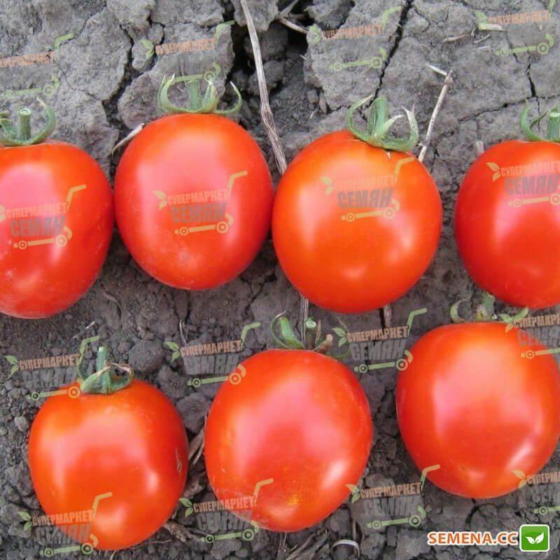 Супер урожайный томат асвон f1: подробное описание, агротехника, отзывы