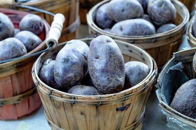 Шедевр немецкой селекции — картофель сорта гала