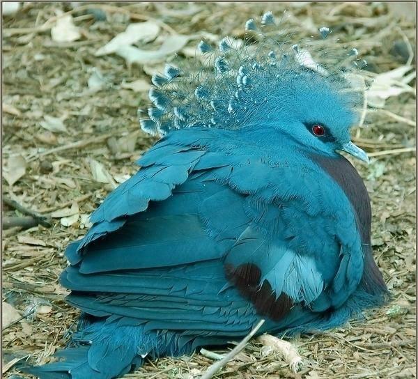 Птица голубь - описание, виды, уход и содержание, разведение