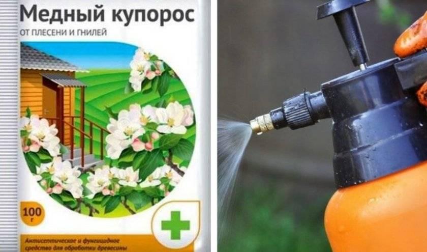 Весенняя обработка кустов смородины и крыжовника от вредителей: способы и препараты