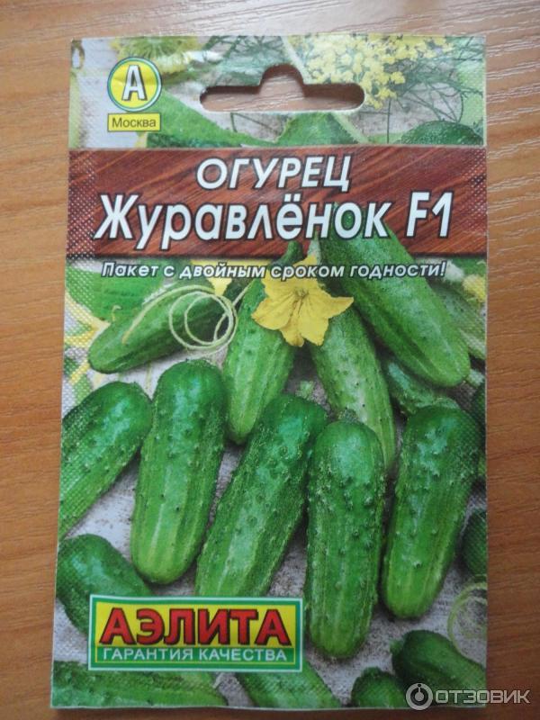 Гибрид огурцов «машенька f1»: фото, видео, описание, посадка, характеристика, урожайность, отзывы