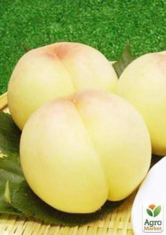 Персик белый лебедь — высокоурожайный сорт, до 60 кг плодов с дерева