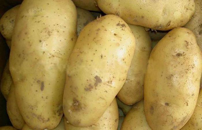 Картофель чародей: характеристики сорта, отзывы, вкусовые качества, посадка и уход