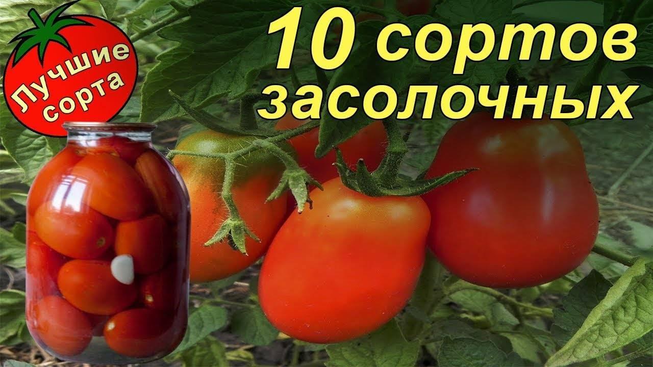 Помидоры засолочный деликатес: описание сорта с фото