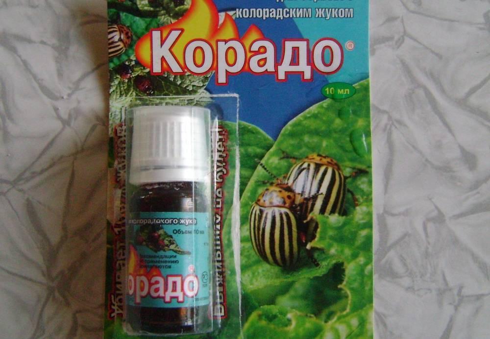 Все, что нужно знать о препарате корадо от колорадского жука
