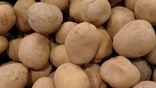 Картофель изюминка: рассмотрим вместе