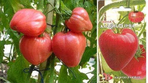 Помидоры «мазарини»: описание сорта, агротехника выращивания