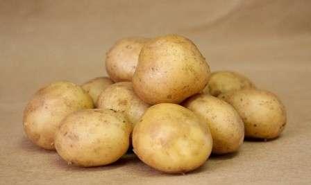 Картофель курода описание сорта