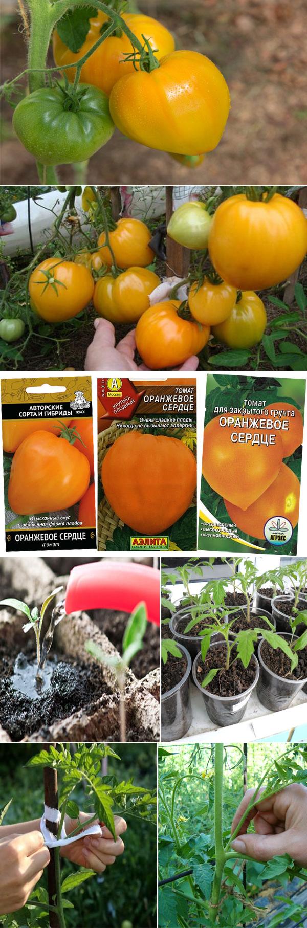 Описание сорта томата оранжевое сердце — как поднять урожайность