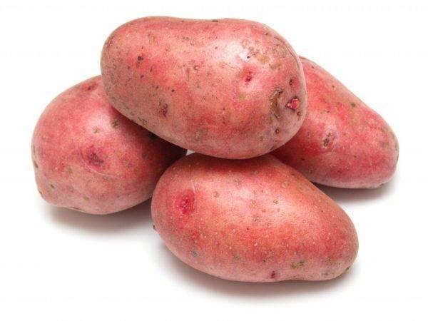 """Агротехника выращивания картофеля """"розара"""""""