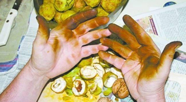 Чем отмыть руки от грецких орехов в домашних условиях