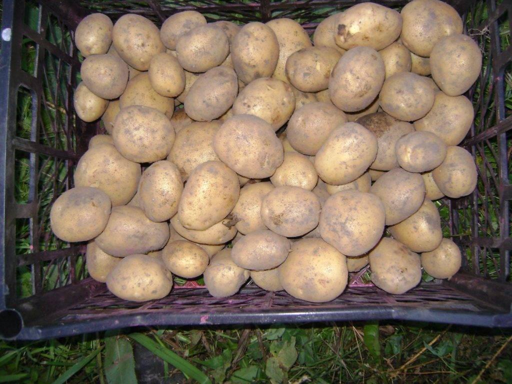 Препарат престиж для обработки картофеля от жука - инструкция, отзывы