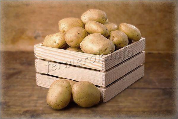 Описание сорта картошки «киви» — сколько дней растет