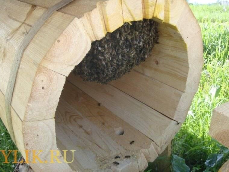 Содержание пчёл: колода, борть,сапетка, дуплянки, рамочный улей