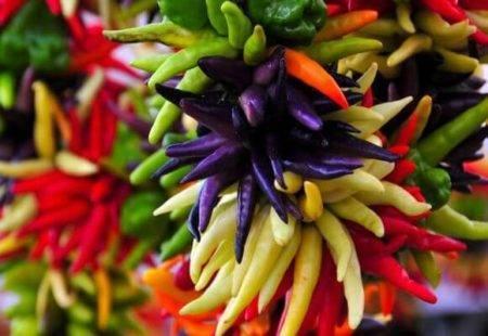 Перец комнатный декоративный: фото сортов растения, уход в домашних условиях и размножение