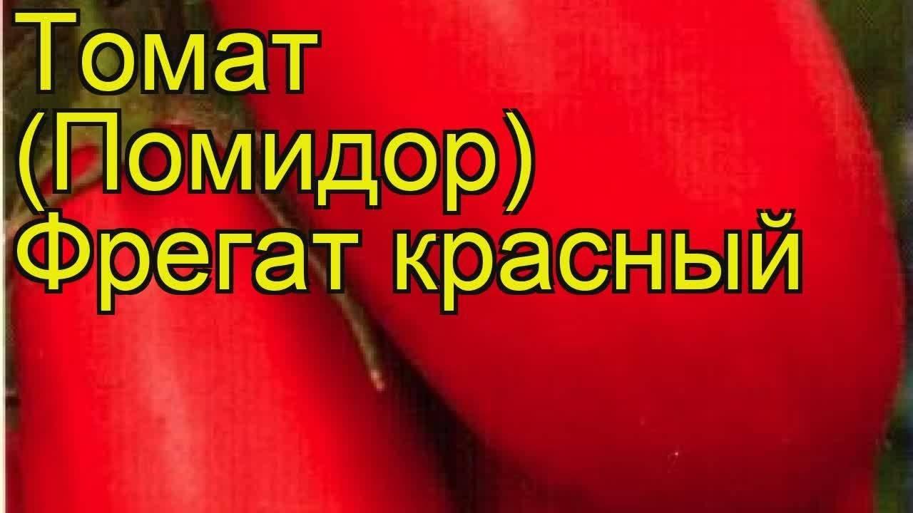 Томат алый фрегат f1: характеристика и описание сорта, фото, отзывы, урожайность