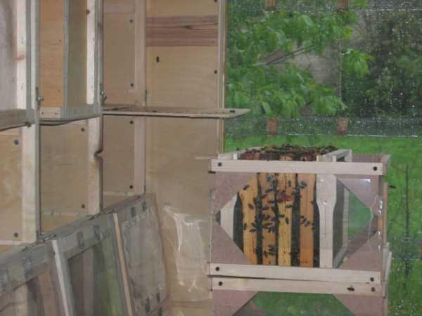 Содержание пчел в передвижных павильонах: основные преимущества и недостатки