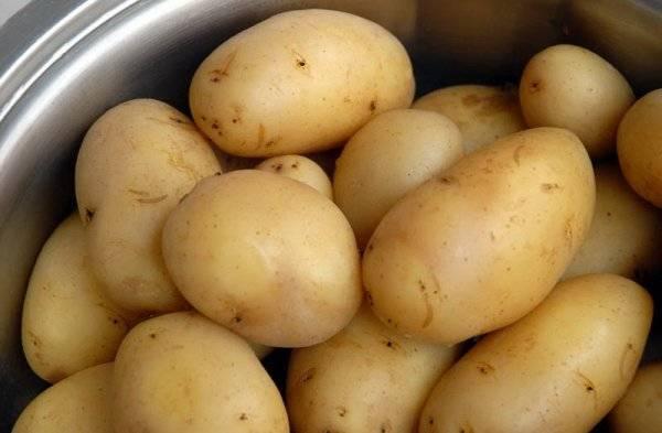 Картофель голубизна: описание сорта, вкусовые качества, особенности выращивания и ухода