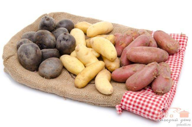 Сорт картофеля жуковский ранний: характеристика и описание, посадка и уход
