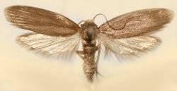 Пчелиные вредители – кто они и как с ними бороться?