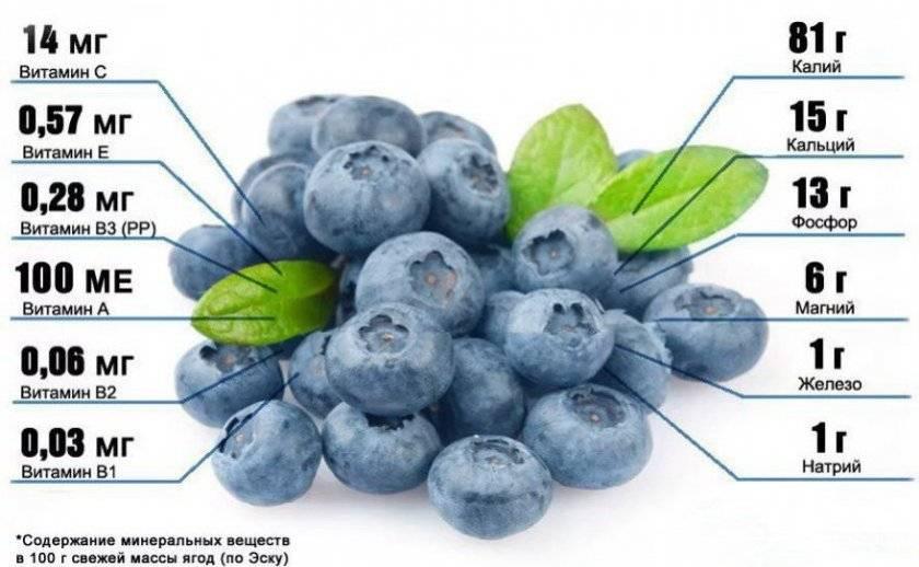 Голубика эрлиблю: характеристика сорта и тонкости выращивания