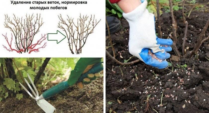 Весенняя бработка деревьев мочевиной с медным купоросом от вредителей и болезней