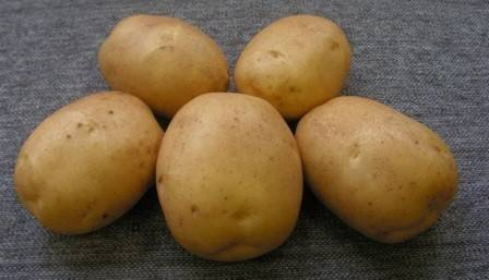 Картофель мадейра: характеристика и описание сорта