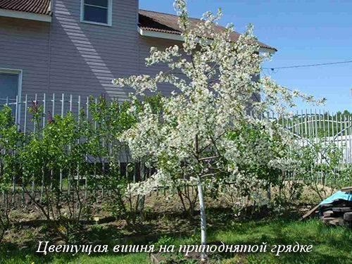 Почему некоторые кусты клубники не плодоносят и даже не цветут и что делать