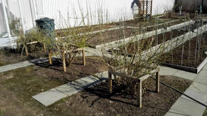 Как огородить смородину своими руками — рассмотрим по пунктам
