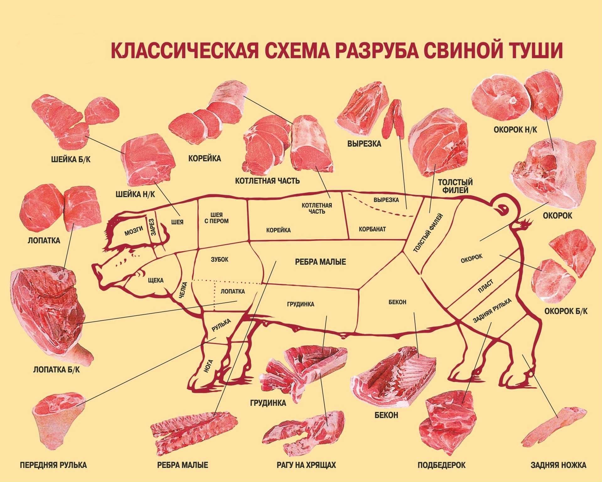 Схема разделки свиной туши, названия частей тела животного