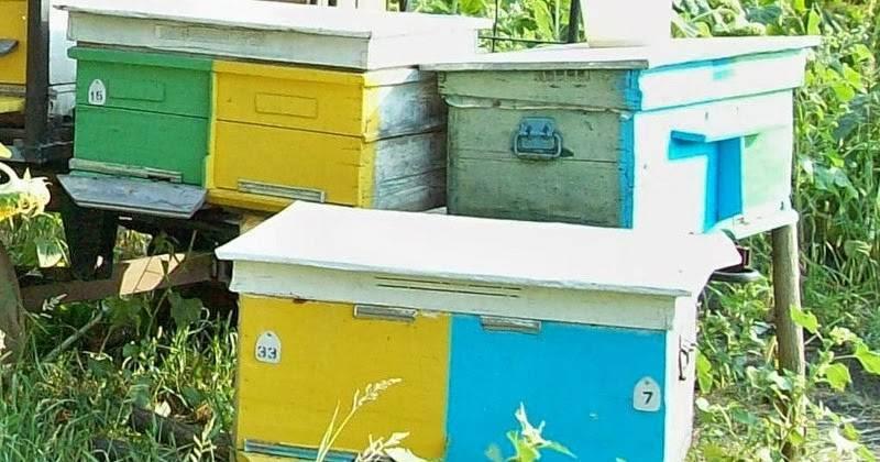 Как зимуют пчелы в улье?