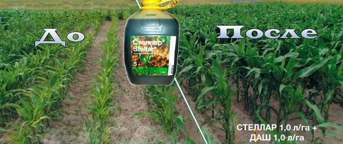 Как применять гербициды для кукурузы