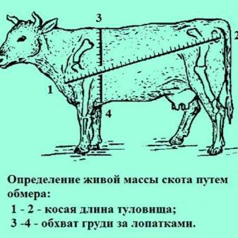 Выход мяса КРС