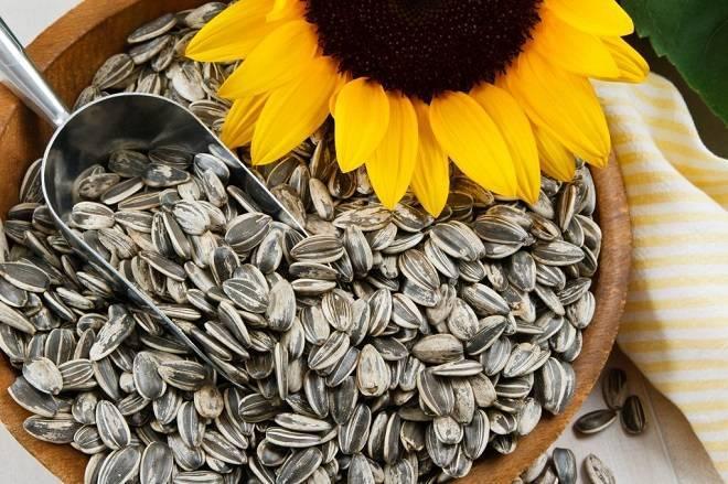 Какие тыквенные семечки полезнее очищенные или неочищенные? | польза и вред