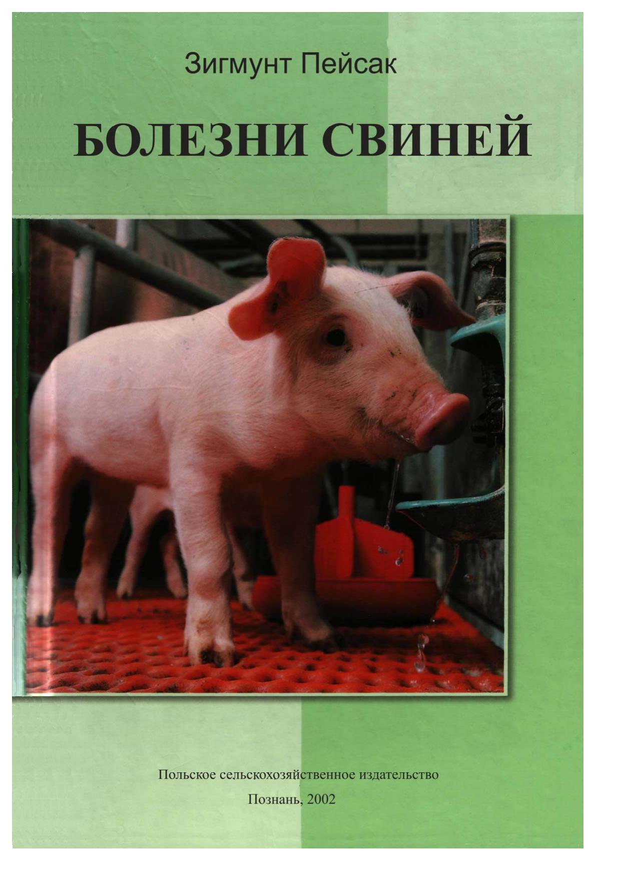 Болезни свиней и поросят: симптомы, признаки, лечение, фото