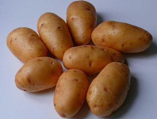 Картофель беллароза — ультраскороспелый сорт
